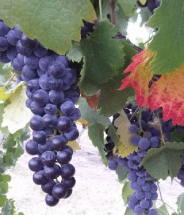 Stottle Winery